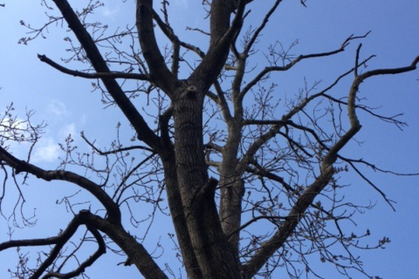 The Fight to Save Our Ash Trees