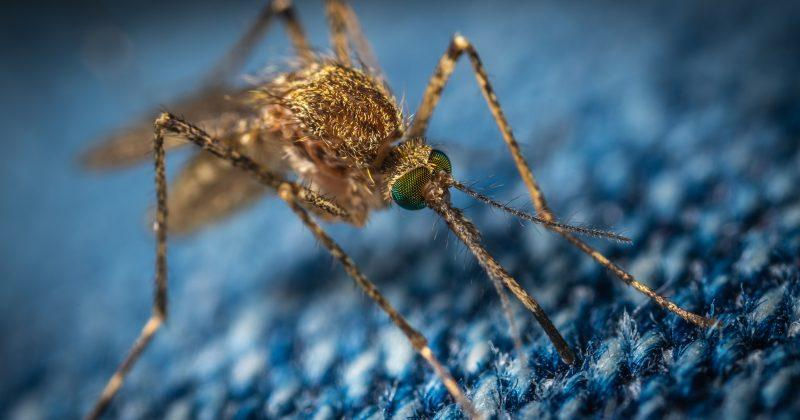 Unravelling the Zika Virus Genome