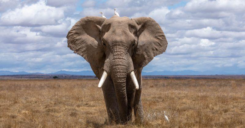 Sixth mass extinction is underway..