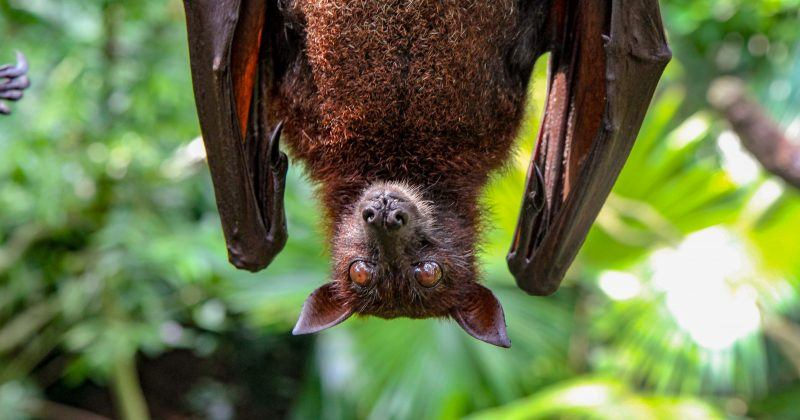 Bats and echolocation – how does it work?