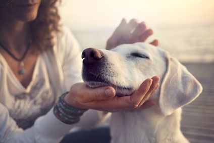 Dogs help to keep you happy and healthy!