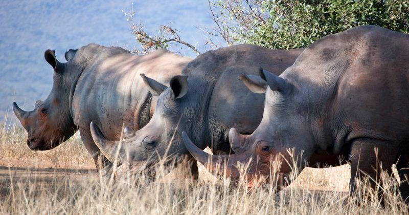 A new DNA tool may help reduce illegal wildlife crime